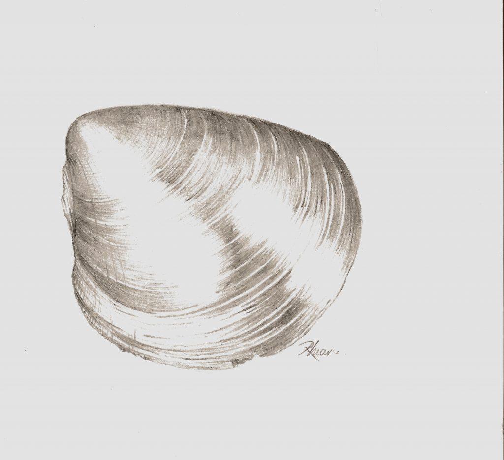 Plagiostoma